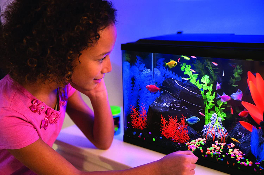 5 Best 20-Gallon Fish Tanks - Enough Space for Your Favorite Fish