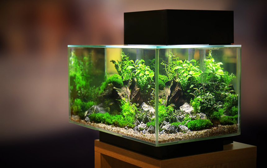 How to Keep a Fish Tank Warm Without a Heater