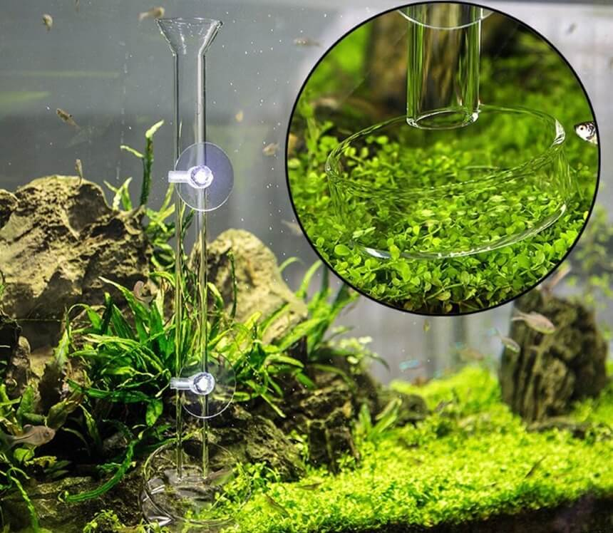 How Many Ghost Shrimp Can You Keep Per Gallon?