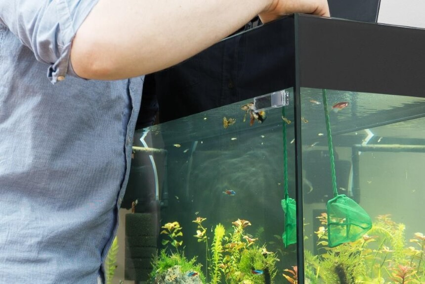 How to Clean Fish Tank Gravel Without a Vacuum