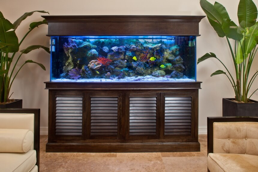 10 Most Effective Filter Media for Your Aquarium to Have the Cleanest Water